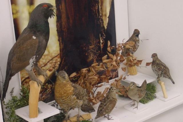 Expozícia Poľovníctvo a rybárstvo v Liptove