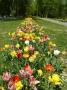 Pilotný projekt: Frekventované miesta v Liptovskom Mikuláši rozkvitnú na jar v nádhernom šate