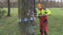 Preveria zdravotný stav stromov v parkoch
