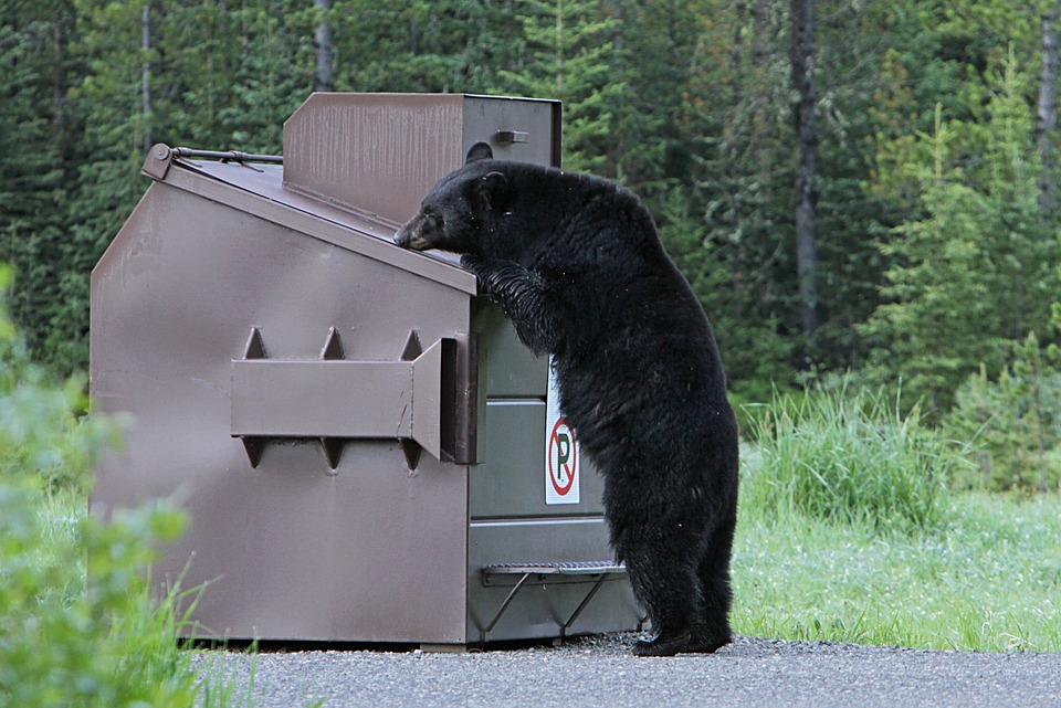 Zabezpečte nádoby na odpad pred medveďom