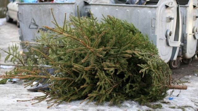 Zber vianočných stromčekov ukončujeme